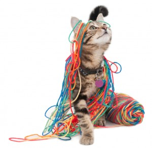 Kitten Wrapped in Colorful Yarn